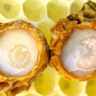 Arı Sütü - royal-jelly-queen-bee